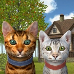 Cat Simulator 2020 Android Mobile Phone Game