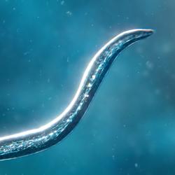 Bionix - Spore & Bacteria Evolution Simulator 3D