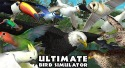 Ultimate Bird Simulator Android Mobile Phone Game