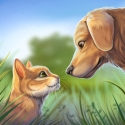 Pet World - My Animal Shelter - Take Care Of Them Android Mobile Phone Game