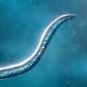 Bionix - Spore & Bacteria Evolution Simulator 3D Android Mobile Phone Game