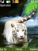 White Tiger S40 Mobile Phone Theme