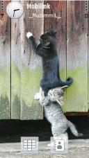 Funny Cats Symbian Mobile Phone Theme