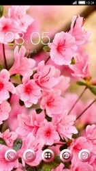 Pink Flowers CLauncher