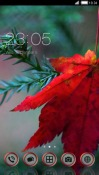 Red Leaf CLauncher Theme for Samsung Galaxy Rush M830