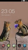 Love Of Squirrels CLauncher Android Mobile Phone Theme