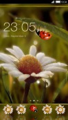 Roma CLauncher Android Mobile Phone Theme