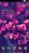 Flowers CLauncher Samsung Galaxy Rush M830 Theme