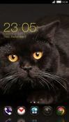 Cat CLauncher HTC Desire 300 Theme