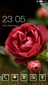 Rose CLauncher Samsung Galaxy Rush M830 Theme