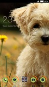 Puppy CLauncher Android Mobile Phone Theme