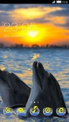 Dolphins CLauncher Android Mobile Phone Theme
