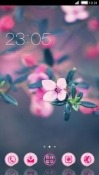 Pink Flower CLauncher Lava A77 Theme