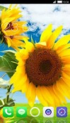 Sunflower CLauncher Android Mobile Phone Theme