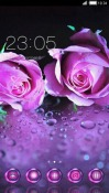 Violet Roses CLauncher Android Mobile Phone Theme