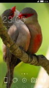 Love Birds CLauncher Android Mobile Phone Theme