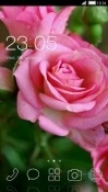 Pink Rose CLauncher Android Mobile Phone Theme