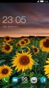 Sun Flowers CLauncher Android Mobile Phone Theme