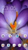 Purple Flower CLauncher Xiaomi Mi 7 Theme