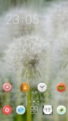 Flowers CLauncher Asus Zenfone 4 ZE554KL Theme