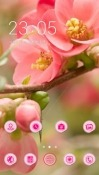 Pink Flowers CLauncher Android Mobile Phone Theme