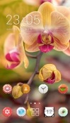 Orchid Flowers CLauncher Android Mobile Phone Theme