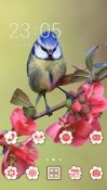 Finch CLauncher Android Mobile Phone Theme