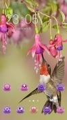 Hummingbird CLauncher Android Mobile Phone Theme