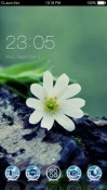 White Flowers CLauncher Huawei Mate 10 Pro Theme
