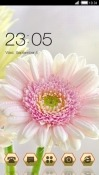 White Flower CLauncher Android Mobile Phone Theme