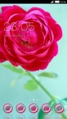 Rose CLauncher Asus Zenfone 4 Pro ZS551KL Theme
