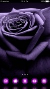 Purple Rose CLauncher Samsung Galaxy A20e Theme