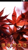 Red Leaves CLauncher Android Mobile Phone Theme