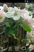 Spring Go Launcher Android Mobile Phone Theme