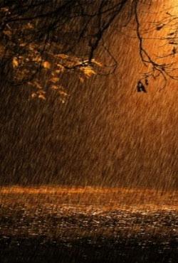 Rain Animated Android Wallpaper Image 2