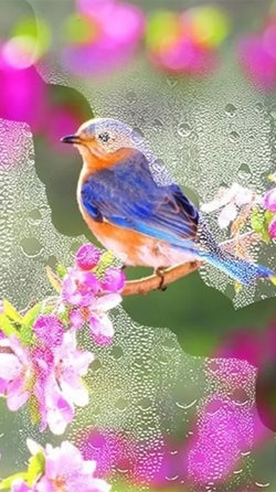 Beauty Birds Android Wallpaper Image 1