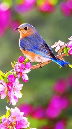 Beauty Birds Android Wallpaper Image 2