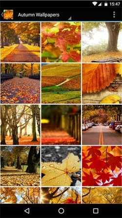 Autumn Android Wallpaper Image 1