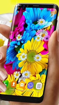 Daisies HQ Android Wallpaper Image 1