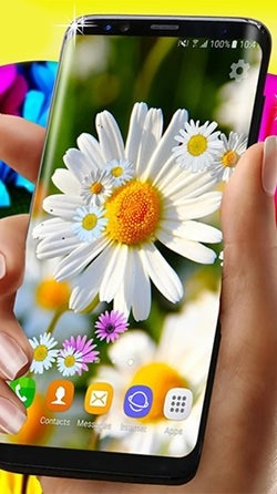 Daisies HQ Android Wallpaper Image 2