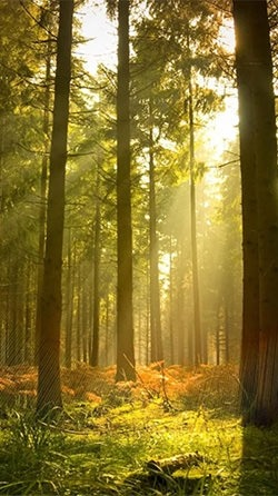 Sunny Forest Android Wallpaper Image 1