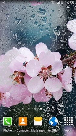 Cherry In Blossom Android Wallpaper Image 1