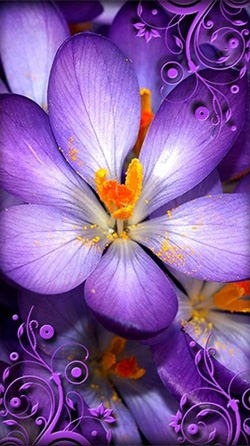Purple Flowers Android Wallpaper Image 1