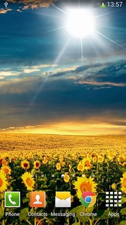 Sunflowers Android Wallpaper Image 1