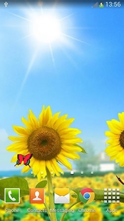 Sunflowers Android Wallpaper Image 2