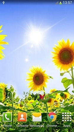 Sunflowers Android Wallpaper Image 3