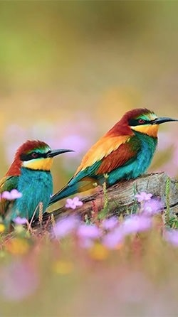 Birds Android Wallpaper Image 2