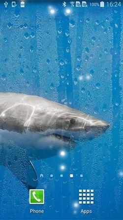 Shark Android Wallpaper Image 3