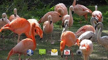 Flamingo Android Wallpaper Image 1