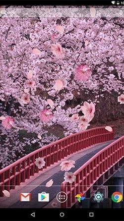 Sakura Android Wallpaper Image 1